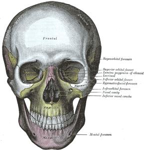 Grays_Anatomy